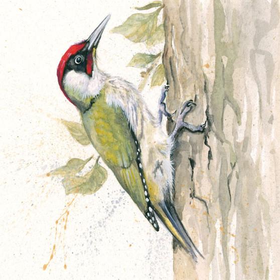 Green Woodpecker Artwork by Kay Johns