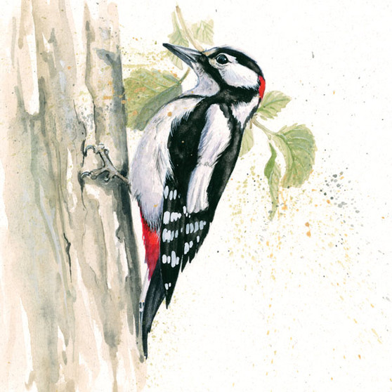 Greater Spotted Woodpecker Artwork by Kay Johns
