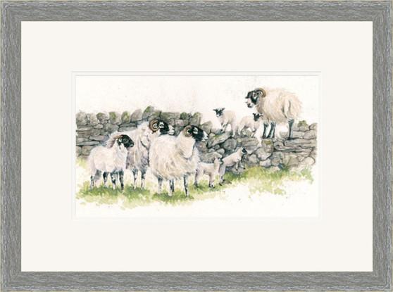 Swaledale  sheep small grey framed