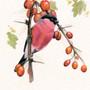 Bullfinch, bird artwork by Kay Johns