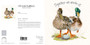 Mallard duck greeting card by Kay Johns - front & rear view