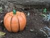 Halloween Pumpkin Spider Transformer