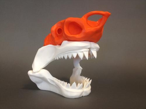 Great White Shark Jaw Skull