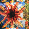 Sunflower Paintball