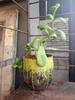 RedHead Pottery Medium Avocado Pot