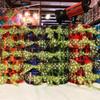 Jelly Roll-Rainbow Rolls