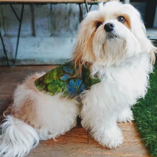Peace Dog Jacket - Size Small