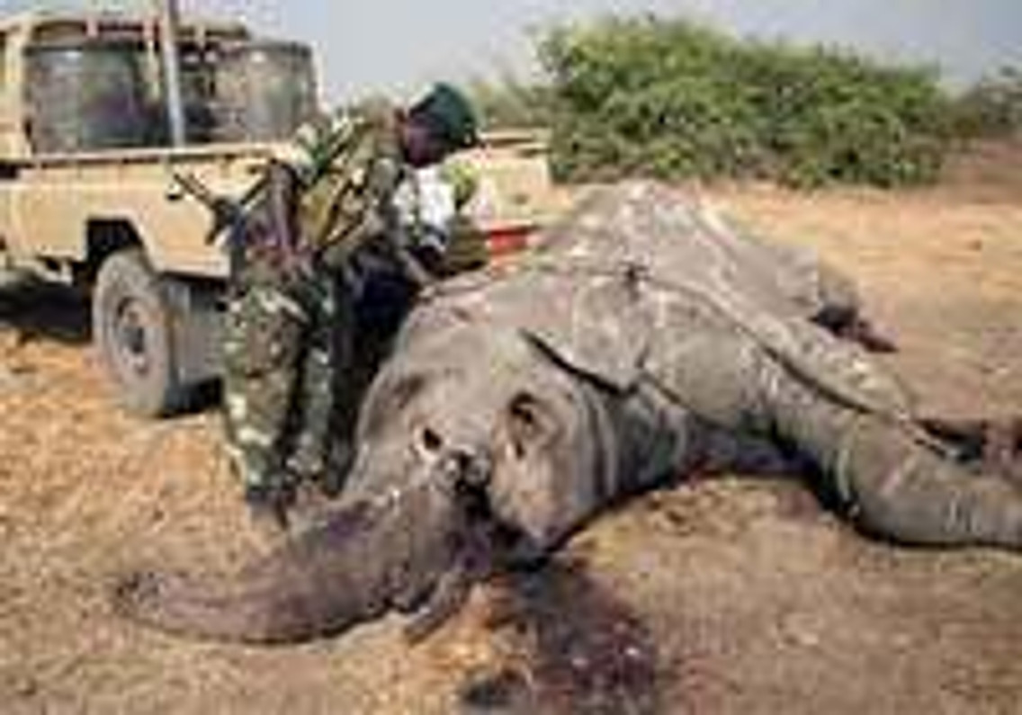 FireSteel.com Does NOT Support the Elephant Ivory Trade