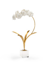 Small orchid on Stand
