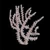 Octopus Coral (Tubastraea Micrantha)