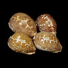 Map Cowrie set of 3