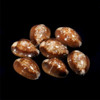 Snake head Cowrie set of 15