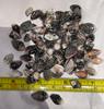 Small striped shells