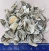 100 White Chiton Segments