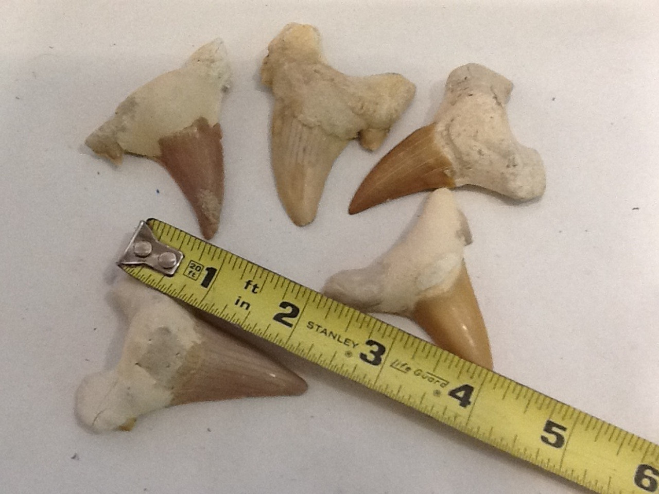 Moroccan Shark Teeth