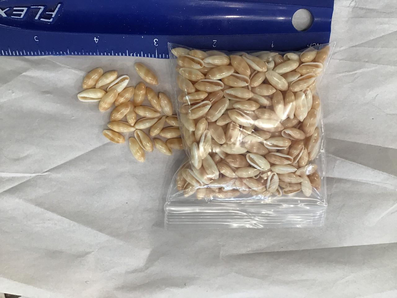 300 pcs Hawaii Rice Shells