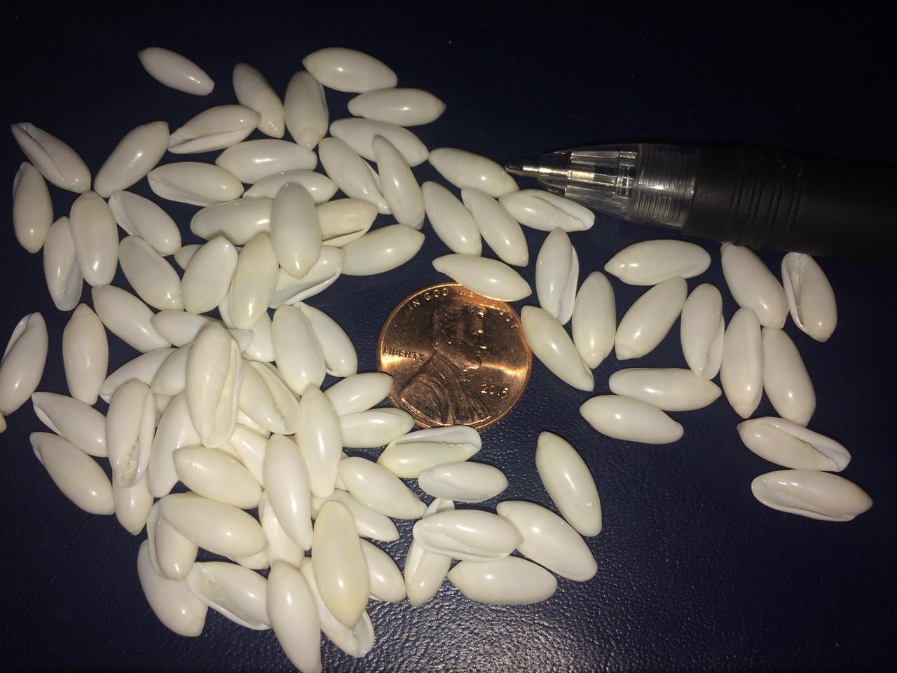 Tiny white rice (volvarina)