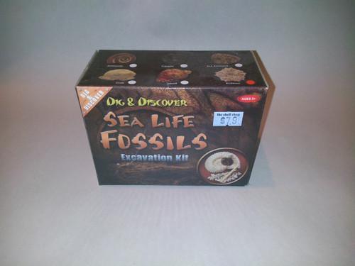 Sea Life Fossil excavation kit