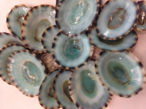 Green Limpets
