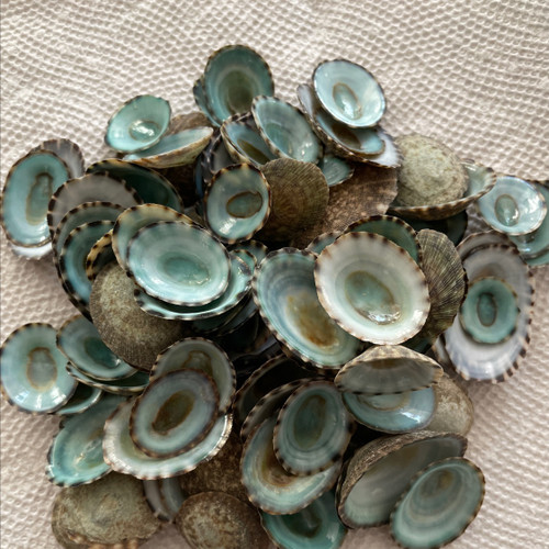 One Pound of Green Limpets