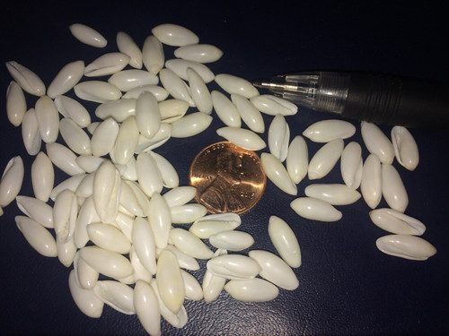 1 pound white rice shells
