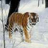 The Big Cats-Unframed by Charles France-Wall Art, Free Shipping, MSRP ($99.00)