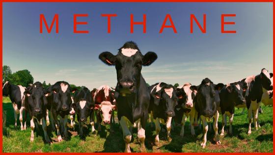 Methane Calibration Gas