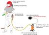 Clemco Apollo 600 HP Supplied Air Respirator with ACV