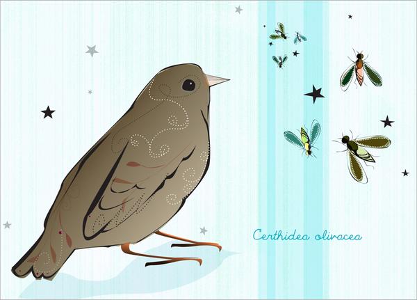 Darwin's Finches print set