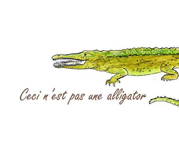 This is not an alligator. (it is a crocodile)