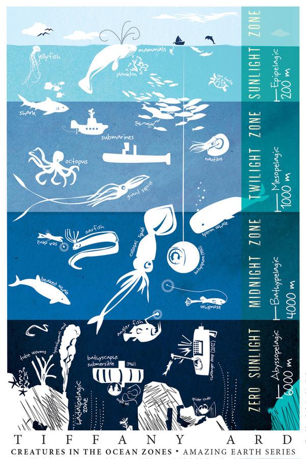 "OCEAN LIFE - Amazing Earth Series by Tiffany Ard (mini poster 12x18"")"