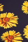 Brushed Summer Daisy Leggings