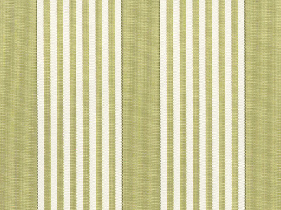 Perennials I Love Stripes Sprout 840 245