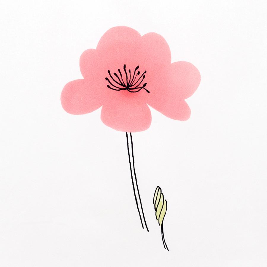 Schumacher Wild Poppies Pink 178391