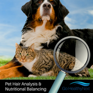Assess your Pet's Health with a Pet Hair Analysis Test