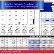 What the Calcium/Phosphorus Ratio indicates on an HTMA test report