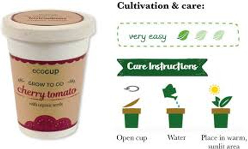 Eco Cup Water & Grow Organic Cherry Tomato