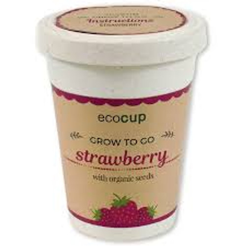 Eco Cup Water & Grow Organic Strawberry