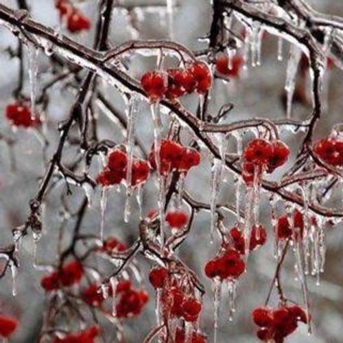 Winter Berry Soy Wax Melts