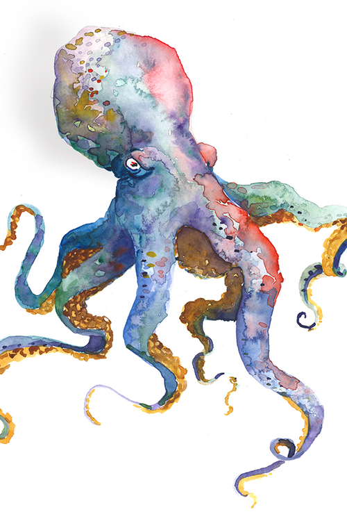 Octopus / Artwork by Mark Ludy