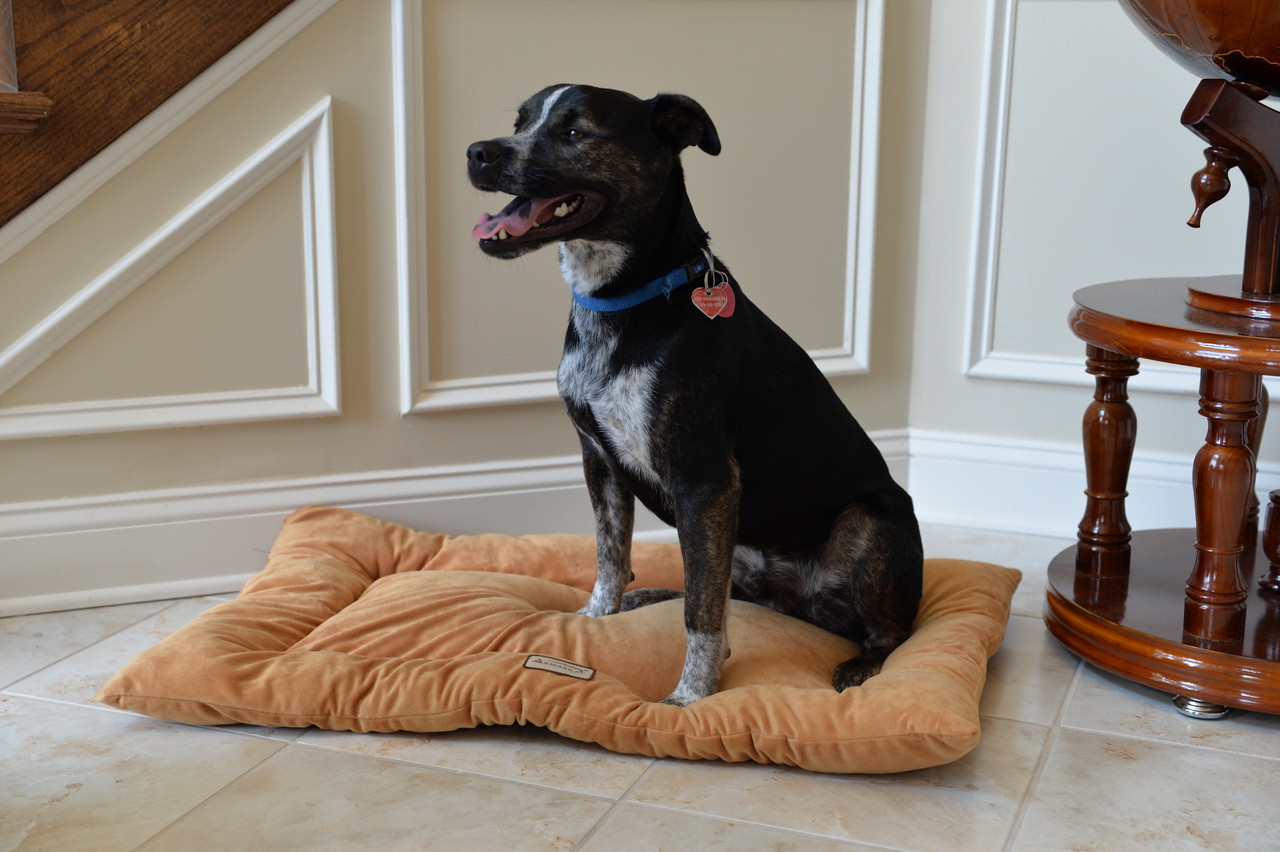 Large Dog Mat M01-L