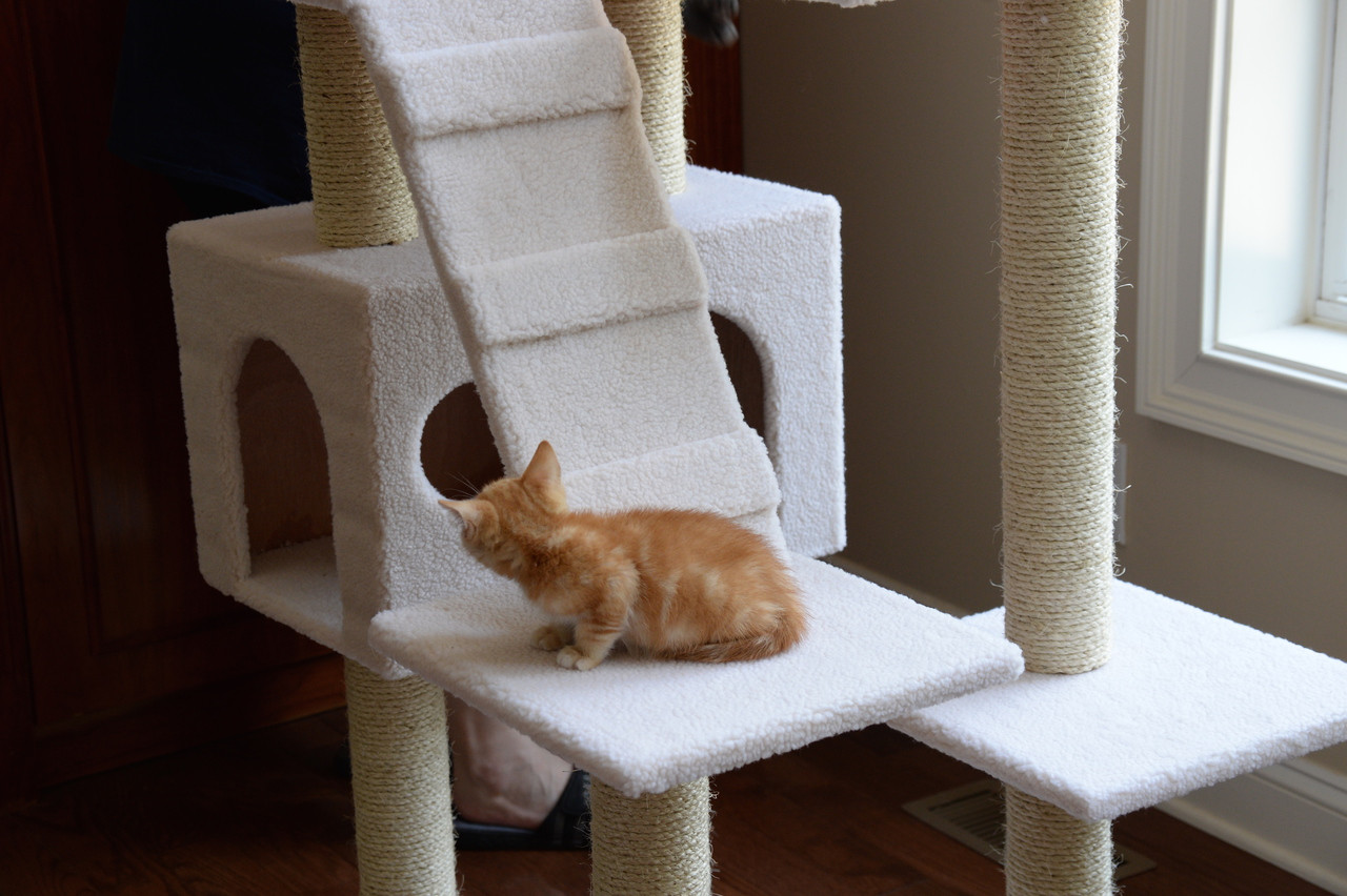 Classic Cat Tree B7701