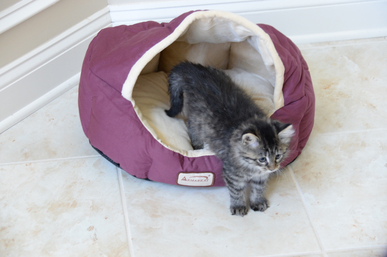 Armarkat Cat Bed C08HJH/MH