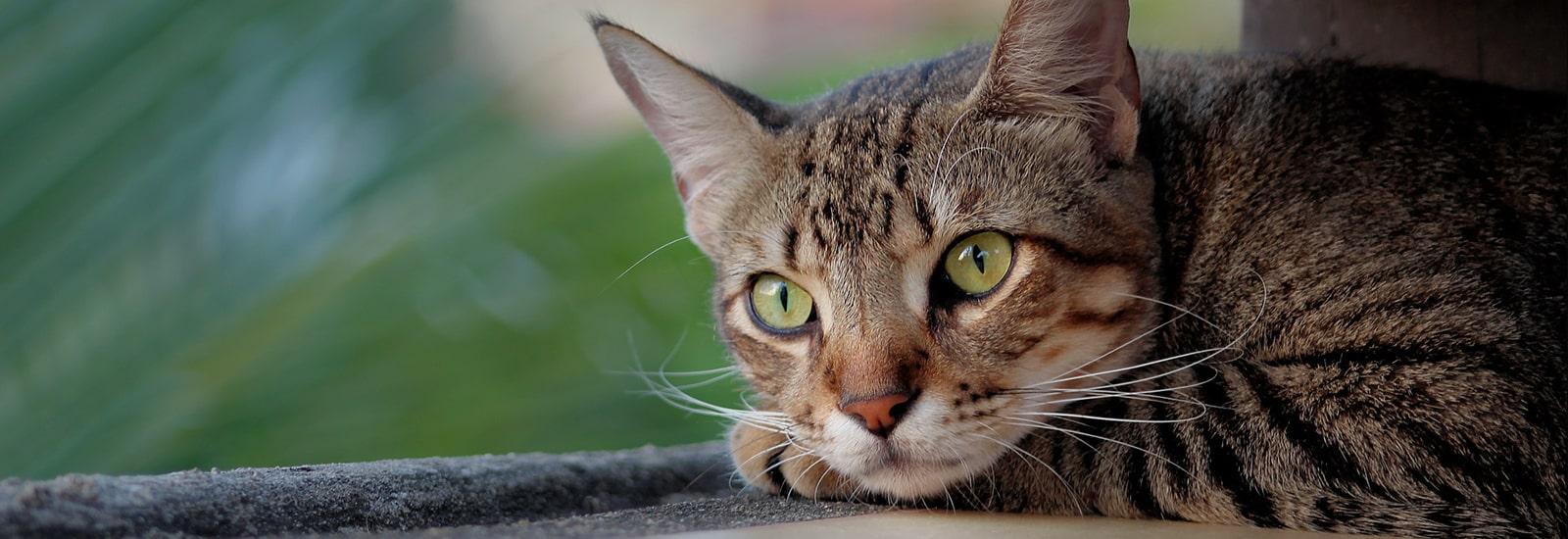 Cat Banner Image