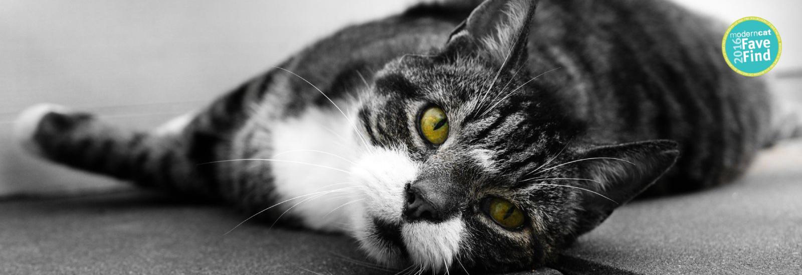 Gery Cat