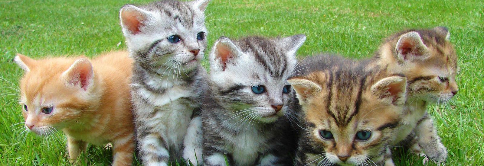 kittens banner image