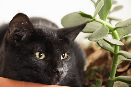 Can CBD Oil Actually Help Your Cat?