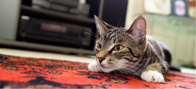 Pet Appreciation Week: Why Does My Cat Hunt?