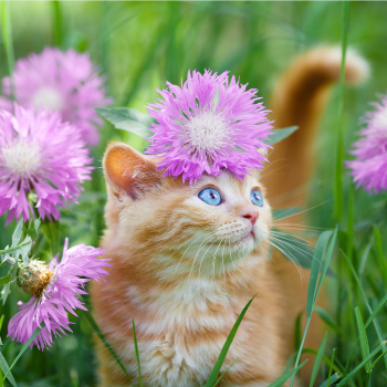 Can My Cat Suffer from Allergies?