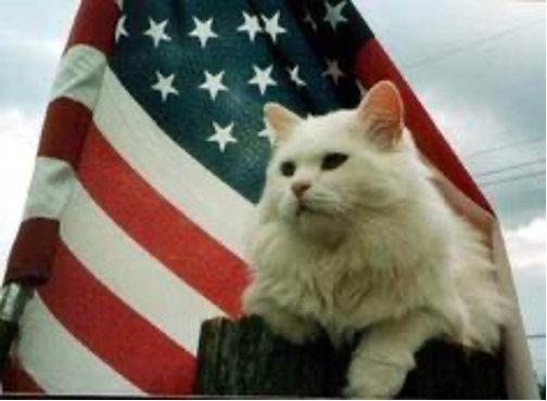Fearful Felines For the Fourth of July!